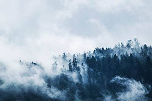 krajobraz, las, źródło: pexels