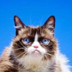 Grumpy cat, źródło nieznane