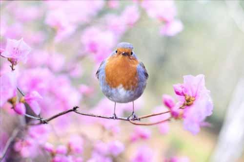 Ptak i wiosenne kwiaty na drzewach